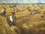 barleyharvest1